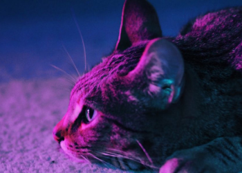 ISFM Feline Emergency and Critical Care for Veterinary Nurses