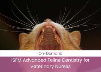 ISFM Advanced Feline Dentistry for Veterinary Nurses