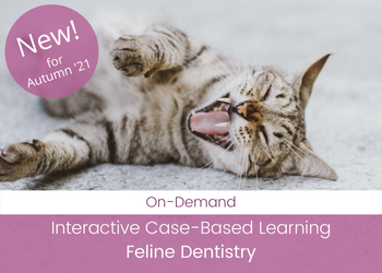 Feline Dentistry - Interactive Case-Based Learning