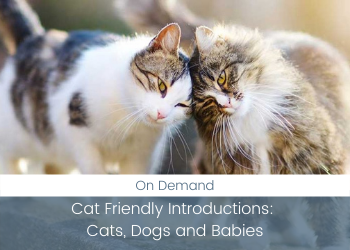 Cat Friendly Introductions: Cats, Dogs and Babies