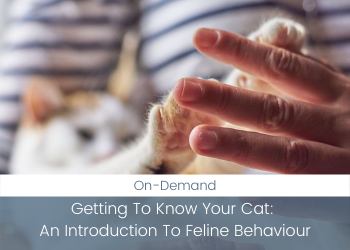 Getting To Know Your Cat: An Introduction To Feline Behaviour