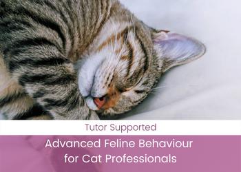 Advanced Feline Behaviour for Cat Professionals