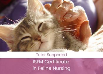 ISFM Certificate in Feline Nursing